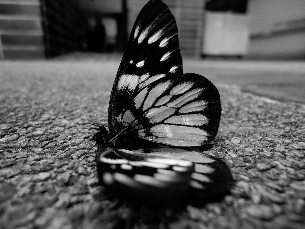 black and white images of butterflies 34 background wallpaper