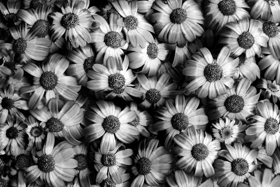 Black and white images of flowers 5 cool hd wallpaper black and white images of flowers 5 cool hd wallpaper mightylinksfo
