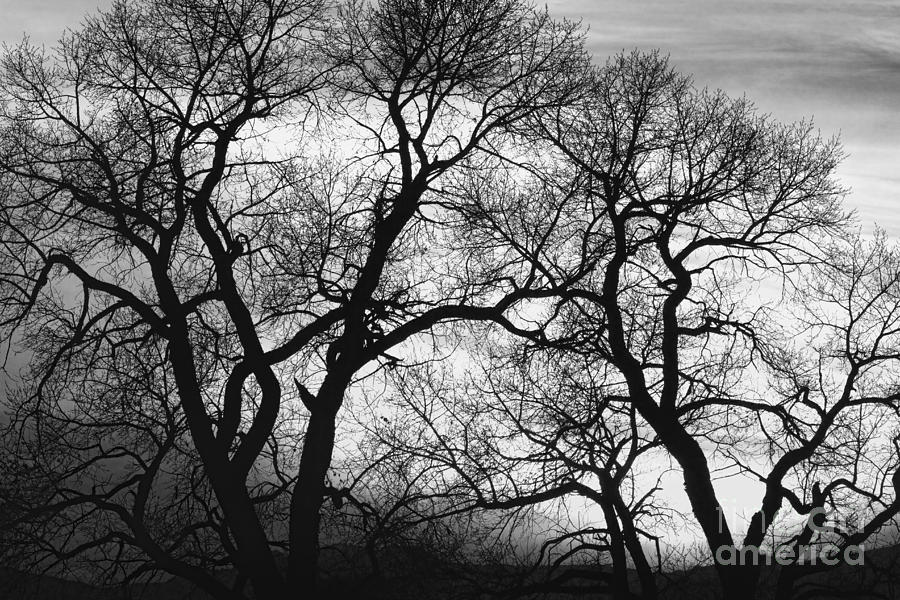 Black and white images of trees 21 background